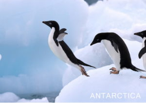 Скачать открытку. Антарктида. Пингвины. Ледник