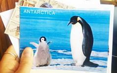 Заказать открытку аз кругосветки