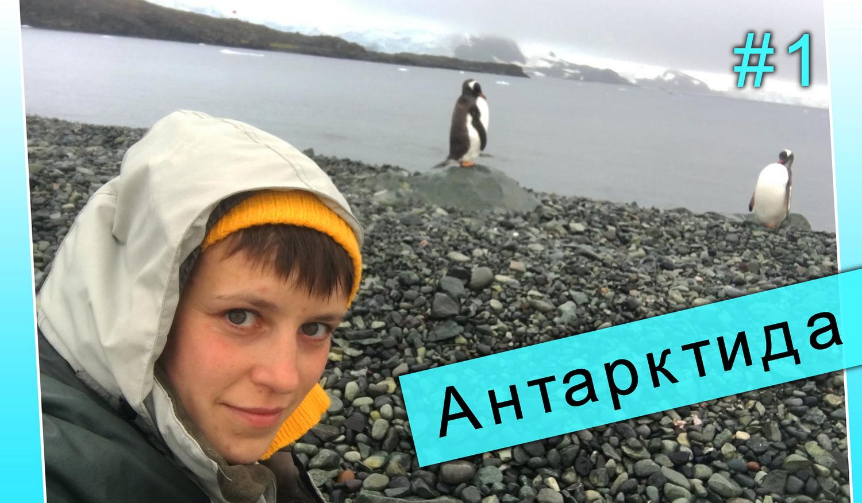 как попасть в Антарктиду. как я поехала в Антарктику